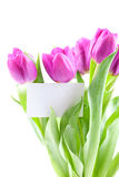 Flower greetings Royalty Free Stock Photo