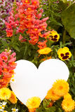 Flower greetings from heart. Garden flowers with white, heart shaped copyspace for your message of love Royalty Free Stock Photos