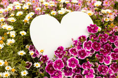 Flower greetings from heart. Garden flowers with white, heart shaped copyspace for your message of love Stock Photography
