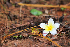 Flower on the ground. Stock Photos
