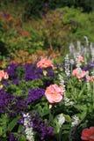 Flower group. Garden flower in august.  flower  garden  pink Stock Photos