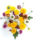 Flower. Group of flower on white Stock Image