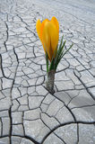 Flower growing in barren land