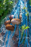 Flower growing breaking through fishing nets , floats and marine royalty free stock photography
