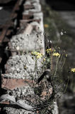Flower growing on a brick Stock Images