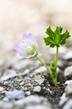 Flower growing from crack in asphalt Stock Photo