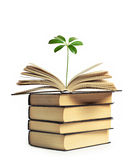 A flower growing out of an open book Stock Photos