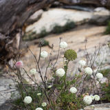 Flower growing out of the stone Royalty Free Stock Photo