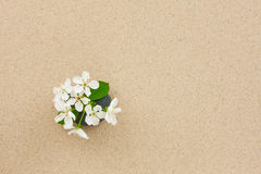 Flower growing out of stone and sand. Royalty Free Stock Photo