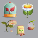 Flower growing stages and artificial ecosystem. A collection of objects showing flower growing stages, seeds and a paper bag, growing sprout, flowering and Royalty Free Stock Photo