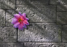 Flower growing on stone wall Stock Photo