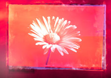 Flower in grunge frame Royalty Free Stock Image
