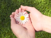 Flower in Hand. A single flower in a hand Stock Images