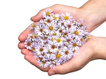 Flower in hand Royalty Free Stock Photography