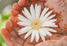 Flower & Hand Stock Image