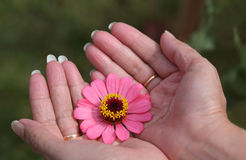 Flower in hand Stock Photos