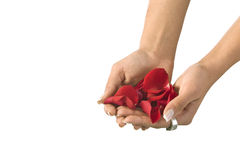 Flower in a Hand Stock Image