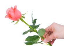 Flower in hand Stock Image