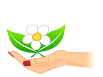 Flower in the hand Royalty Free Stock Images