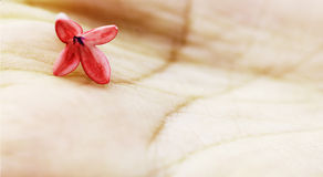 Flower on hand. Delicate red flower resting on the palm of a hand Royalty Free Stock Photography