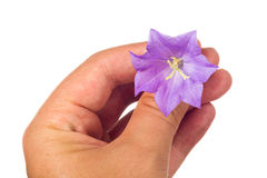 Flower in the hand Stock Photo