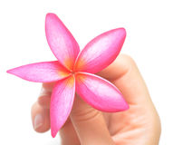Flower in hand Royalty Free Stock Photo