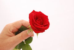flower hand стоковая фотография rf