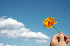 Flower in hand. Yellow flower in hand against blue sky and white clouds Stock Images