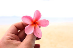 Flower in the hand. A tropical flower in the hand on a beach background Stock Image