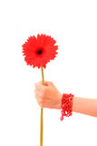 Flower in  hand Royalty Free Stock Photos