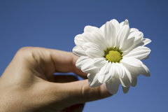 Flower and hand against blue sky Royalty Free Stock Photography