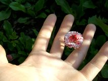 Flower in hand. Beauty can be small. royalty free stock photo