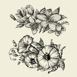Flower. Hand drawn sketch bindweed, tutsan, hypericum. Vector illustration Royalty Free Stock Images