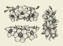 Flower. Hand drawn sketch tutsan, hypericum, narcissus, cherry flowers. Vector illustration Royalty Free Stock Image