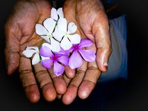 Flower on hand Royalty Free Stock Photos