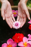 Flower Hand Reflection. Hand offering magnolia flower over dark water Royalty Free Stock Photo