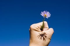 Flower in hand up Royalty Free Stock Images