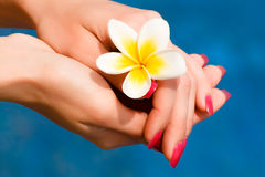 Flower in hands. Beautiful tropical flower in wellness woman hands Stock Photography