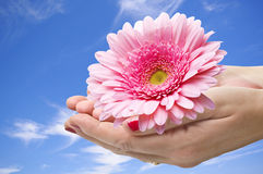 Flower in the hands Royalty Free Stock Photo