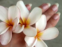 Flower-hands. Frangipani blossoms between fingers Royalty Free Stock Photography
