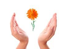 Flower between hands Stock Photography