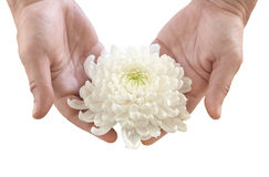 Flower in the hands Royalty Free Stock Photos