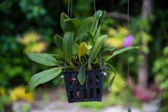 Flower hanged in the pot. Flower hanged in the plastic pot Royalty Free Stock Image