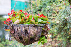 Flower hanging basket royalty free stock image