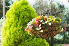 Flower hanging basket Royalty Free Stock Images
