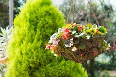 Flower hanging basket Royalty Free Stock Photos