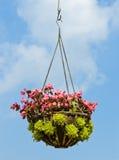 Flower hanging basket Stock Images