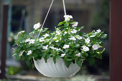 Flower hanging basket Royalty Free Stock Photo