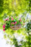 Flower hanging basket Stock Image