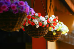 Flower hanging. Colorful  flowers mobile hanging Baskets Royalty Free Stock Photos